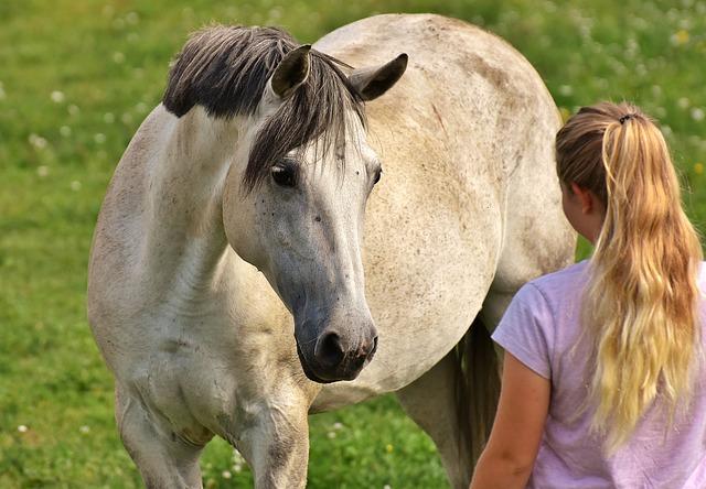 děvče a kůň