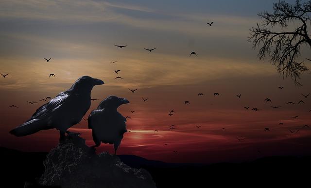 vrány