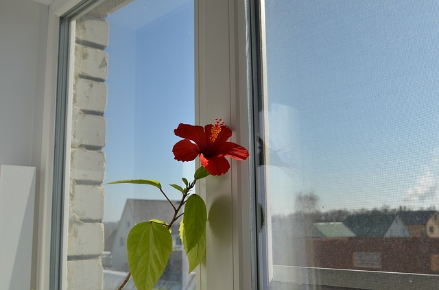 květina v okně.jpg