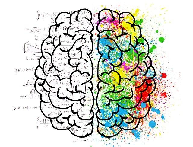 Mozog, myseľ.jpg